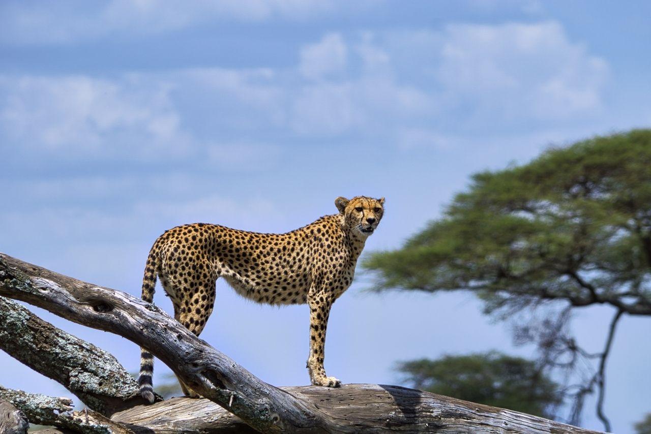 Where should I go to… Kenya or Tanzania?