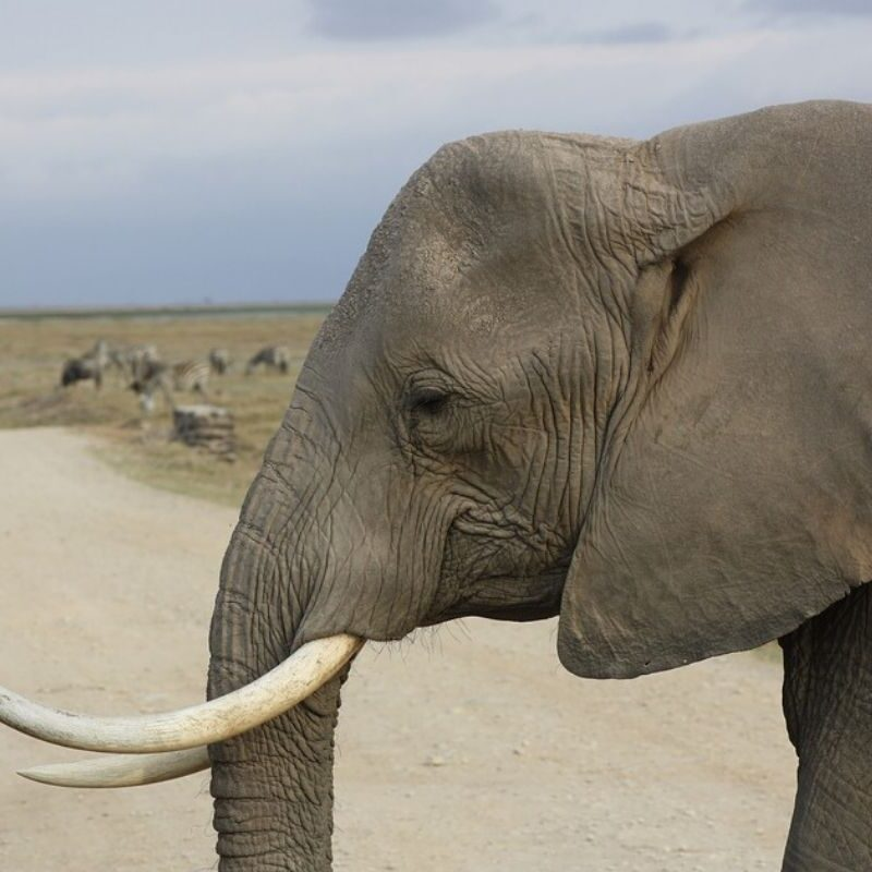 Amboseli Safari Tour